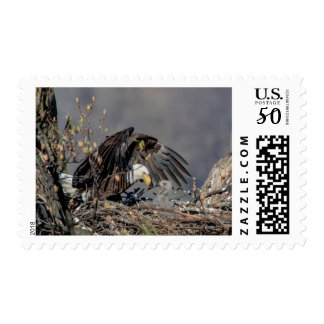 Bald Eagle with her baby Postage
