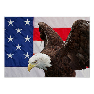 Bald Eagle with the American Flag Poster