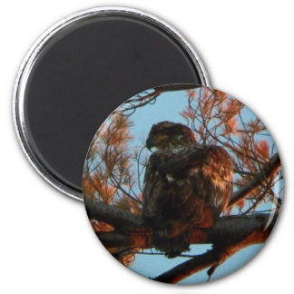 Bald Eagle Yearling Magnet