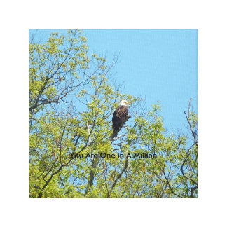 "Bald Eagle  ""You Are One In A Million""  Art Canvas"