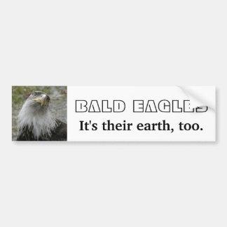 Bald Eagle, Young Adult Car Bumper Sticker