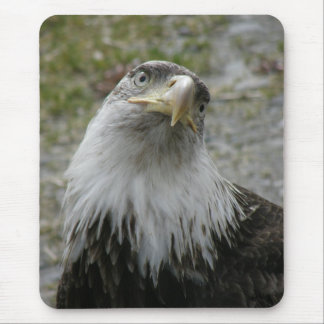 Bald Eagle, Young Adult Mouse Pad