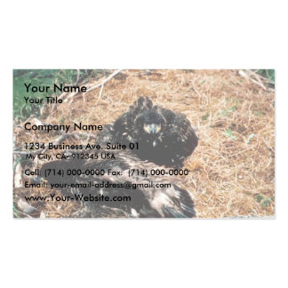 Bald Eagle Young in Nest Business Cards