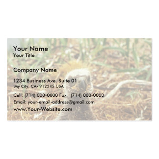 Bald Eagle Young in Nest Business Card Template