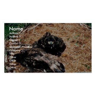 Bald Eagle Young in Nest Business Card Templates