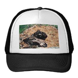 Bald Eagle Young in Nest Hat