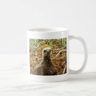 Bald Eagle Young in Nest Mugs