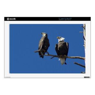 "Bald Eagles 17"" Laptop Decals"