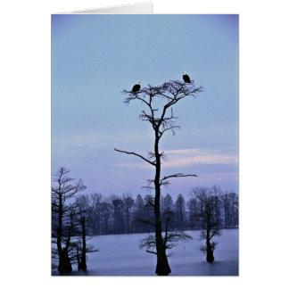 Bald Eagles at Reelfoot National Wildlife Refuge Greeting Card