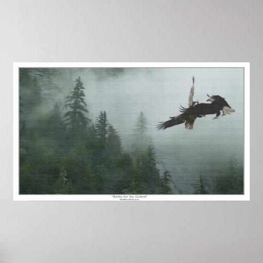 Bald Eagles Battling over a Forest Art Print
