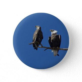 Bald Eagles Buttons