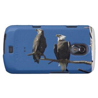 Bald Eagles Galaxy Nexus Cover