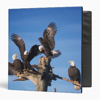 bald eagles, Haliaeetus leuccocephalus, Vinyl Binder