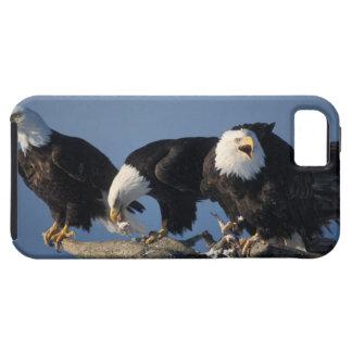 bald eagles, Haliaeetus leuccocephalus, iPhone SE/5/5s Case