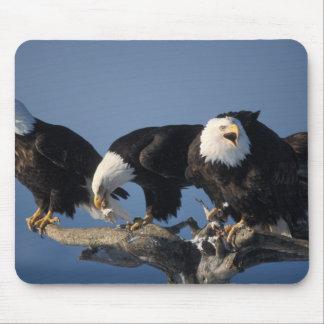 bald eagles, Haliaeetus leuccocephalus, Mouse Pad