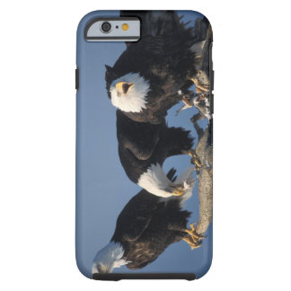 bald eagles, Haliaeetus leuccocephalus, Tough iPhone 6 Case