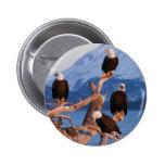Bald Eagles Homer Alaska Button