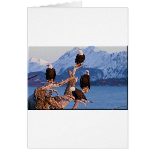 Bald Eagles Homer Alaska Card