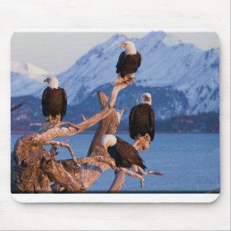 Bald Eagles Homer Alaska Mouse Pad