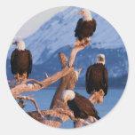 Bald Eagles Homer Alaska Round Stickers