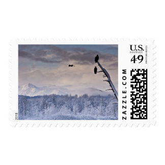 Bald eagles in preserve postage