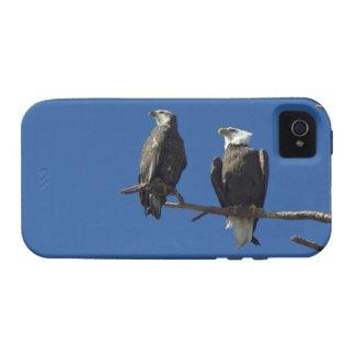Bald Eagles iPhone 4/4S Case