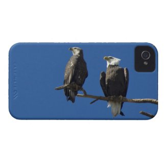 Bald Eagles iPhone 4 Cases