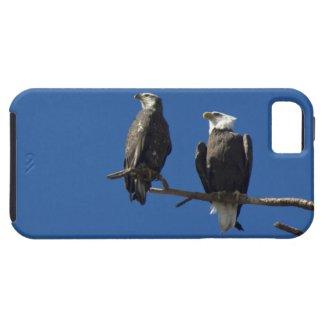 Bald Eagles iPhone 5 Case