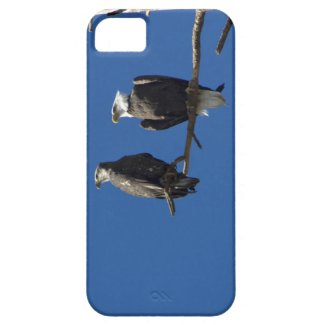 Bald Eagles iPhone 5 Cases