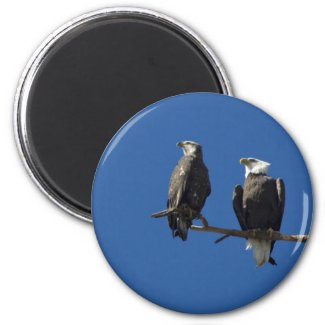 Bald Eagles Magnet
