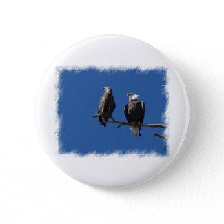 Bald Eagles Pins