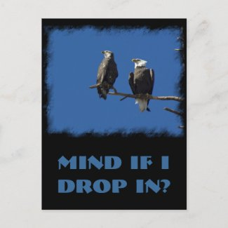 Bald Eagles Post Cards