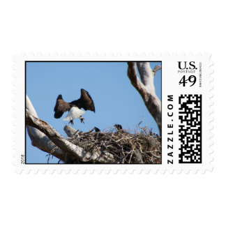 Bald Eagles Stamp