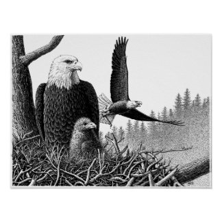 Bald Eagles Posters
