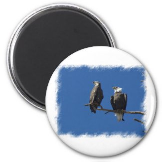 Bald Eagles Refrigerator Magnet