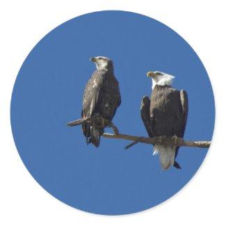 Bald Eagles Round Sticker