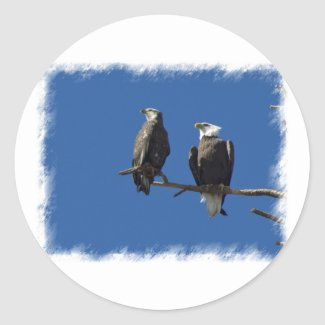 Bald Eagles Stickers