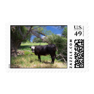 Bald Faced Black Cow Postage