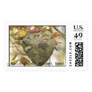 Bald-faced Hornet Nest Stamps