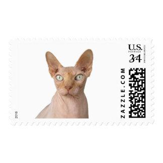 Bald Hairless Sphynx Cat New Pet Kitty Stamp