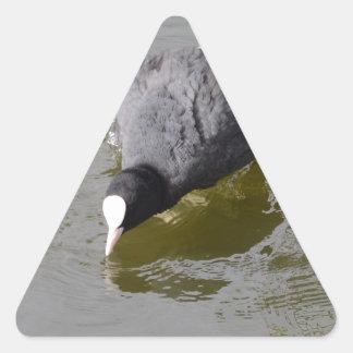 Bald Headed Coot Triangle Sticker