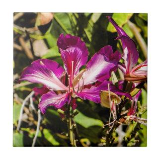 """Baldosa cerámica 4,25"""" de la orquídea de Hong Kong Azulejo Cuadrado Pequeño"""