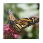 Baldosa cerámica de la flor de mariposa azulejos cerámicos