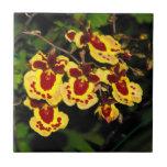 Baldosa cerámica de la orquídea de Oncidium Azulejos Ceramicos