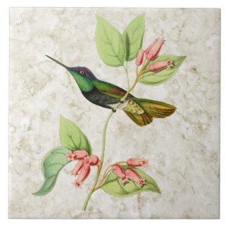 Baldosa cerámica del colibrí magnífico azulejo cuadrado grande