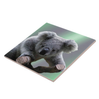 Baldosa cerámica del oso de koala azulejo cuadrado grande