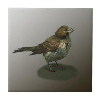 Baldosa cerámica del pequeño pájaro desaliñado azulejo cerámica