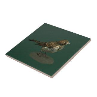 Baldosa cerámica del pequeño pájaro desaliñado tejas  ceramicas