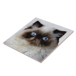 Baldosa cerámica grande del gato divertido azulejo cuadrado grande