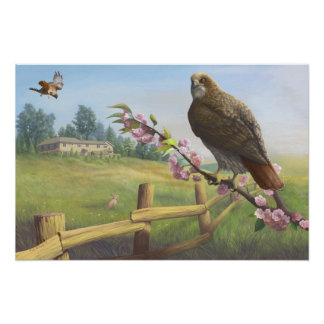 Baldpate Red-tails Print